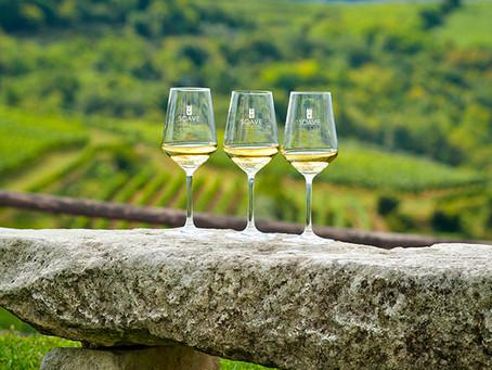 Cuisine et vins vénitiens: Les vins des terres du Soave