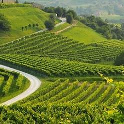 strada-del-vino-colli-euganei-2018-600x2