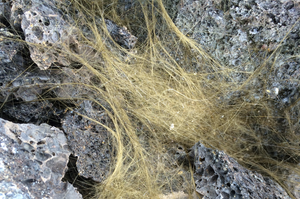 pele's hair volcanic glass public domain picture