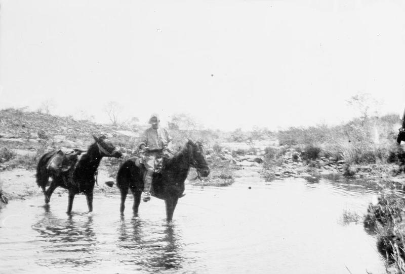 Boer War horses, South Africa, 1899, the origin of stellenbosch