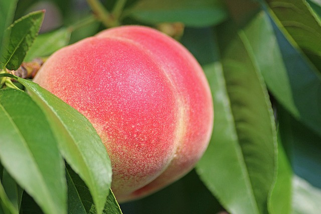 A peach looking like a backside, an image of buttock mail