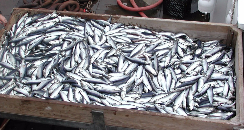 large crate of herrings, once known as glasgow magistrates
