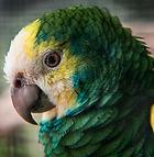 The Parrot That Kept A Language Alive