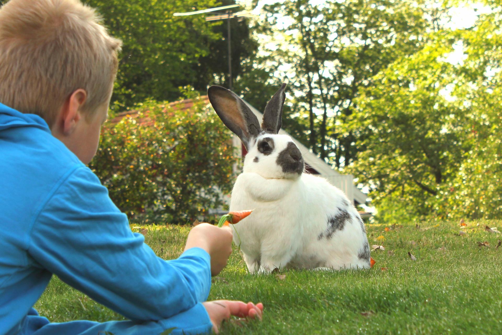 konijnen vakantiehuis in zweden