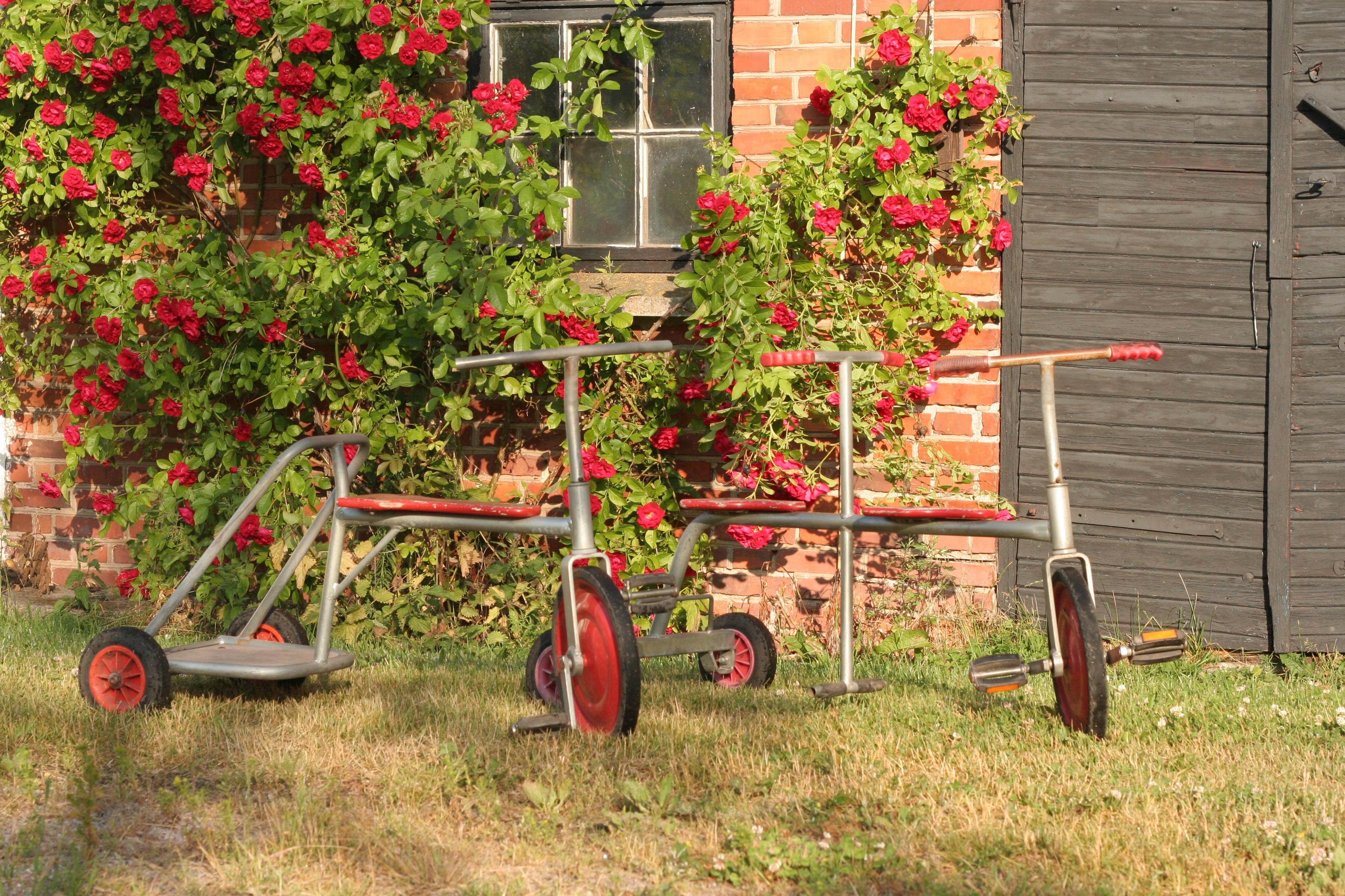 fietsjes vakantiehuis in zweden