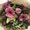 Thumbnail: Miss Blossom -Pretty in Pink