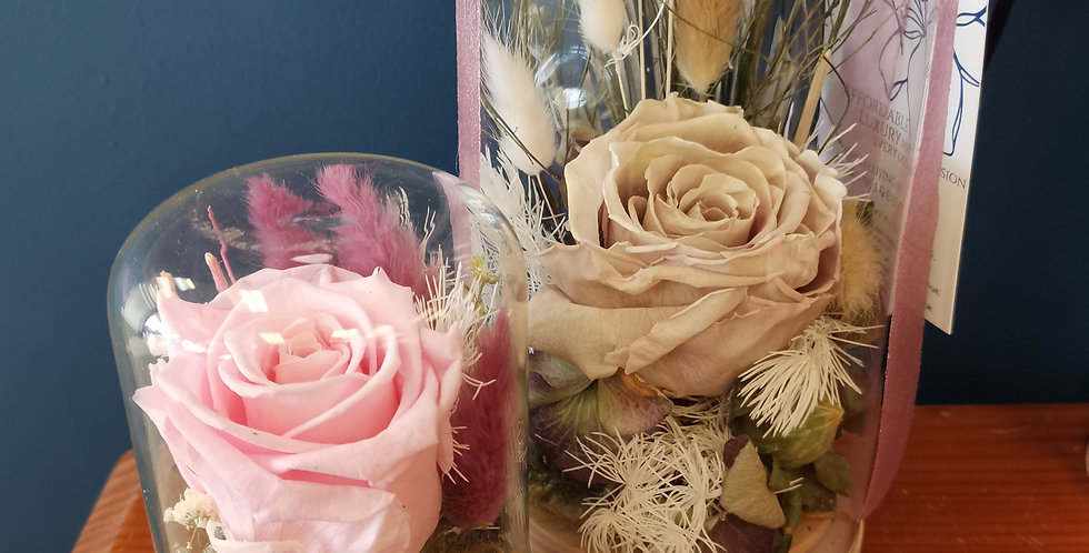 Everlasting Dried Domed Rose Collection