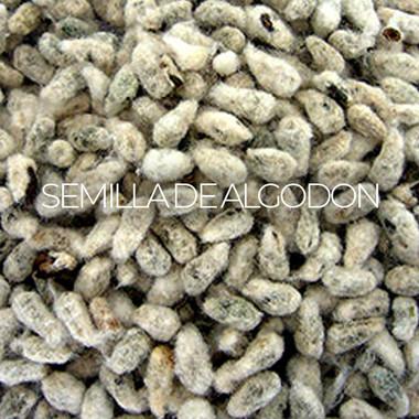 Semilla De Algodon