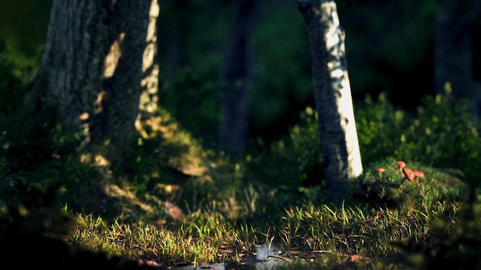 3D forest bokeh
