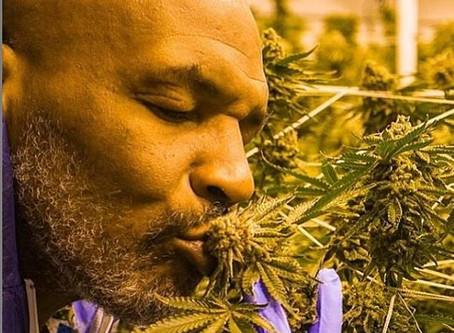 Mike Tyson says guests are invited to take as much marijuana as they want at his vacation ranch.