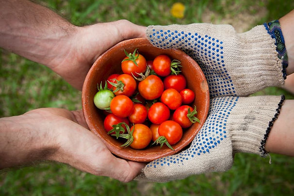 tomato-2.2c5bfaeb.jpg
