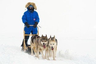 Norwegian Dog Sledding