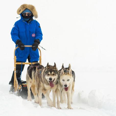 Norwegian Dog Sledding