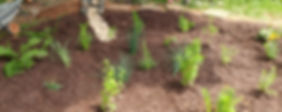 VCAP Rain Garden_edited.jpg