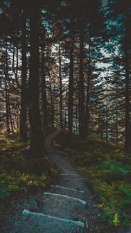 Mt. Roberts Trail Walkway.jpg