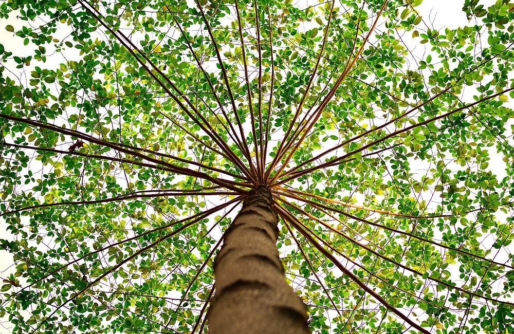 vocation arbre