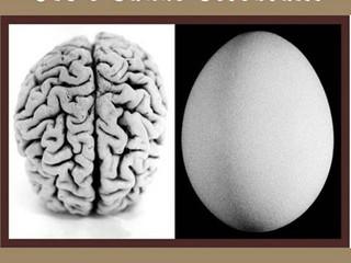 Ovo e Saúde Cerebral!!