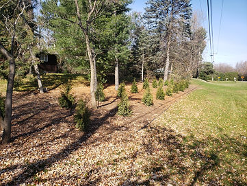 Plant Bed with Arborvitae Screen.jpg