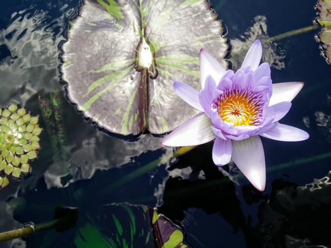 Outdoor Blossom