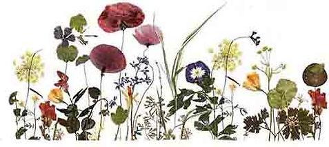 bloemenanimatie klein.jpg