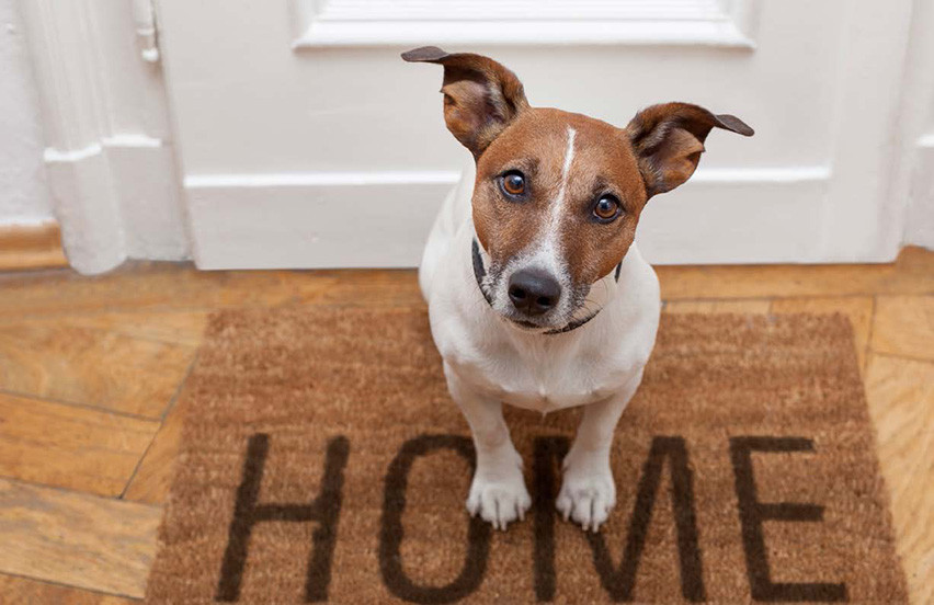 Selling your home when you have pets.
