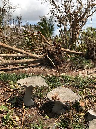 Irma's anger