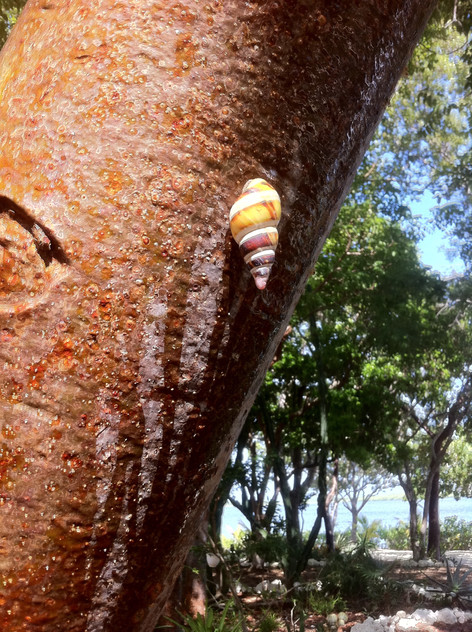 Rare tree snail - very colorful