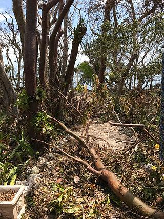 Irma's wrath