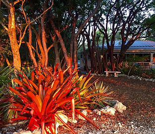 Bromeliads in the sun for Wedding at Historic Shadow Point in Key Largo