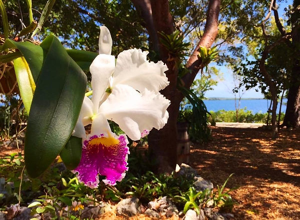 Garden Weddings, Beach weddings, Vacation Rental