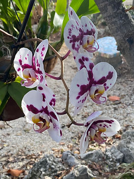 beautiful orchids abound
