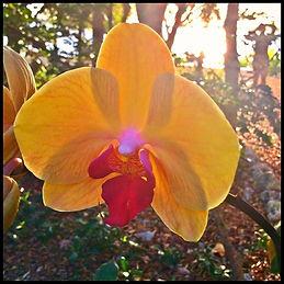 Secret Garden at Historic Shadow Point,