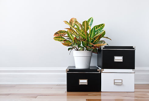 bigstock-Storage-Boxes-And-Green-Plant-38532685.jpg