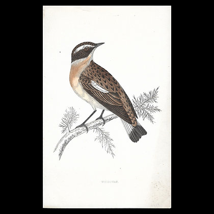 Winchat - Handcoloured Print Circa 1880