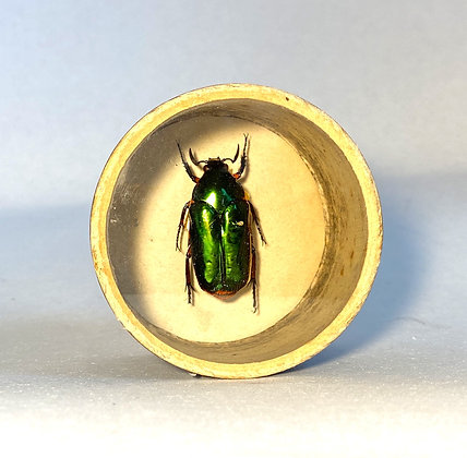 Emerald Scarab Beetle - Bug Pot