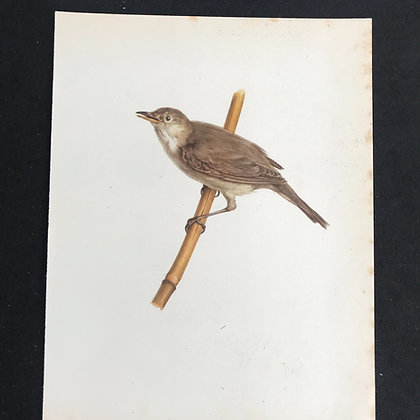 Life Size Bird Print