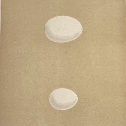 Rock Dove and Turtle Dove, Egg Print Circa 1890