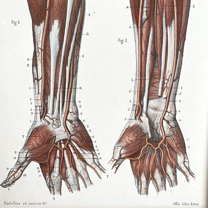 8 Veins of arm