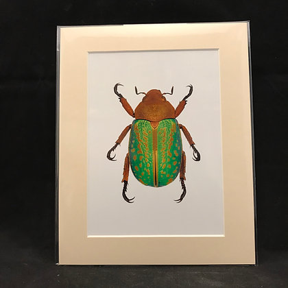 Chrisina victorina - Real Macro Photograph of Insect #3