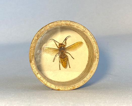 Hornet - Bug Pot