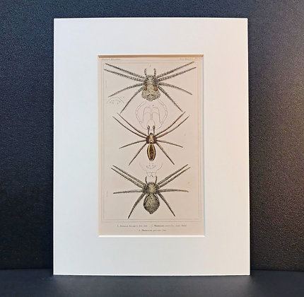 Arachnid Plate 9B - Hand Coloured Circa 1860