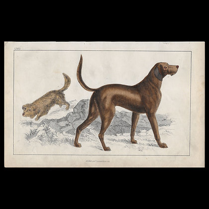 Dogs - 1858 Hand Watercoloured Print