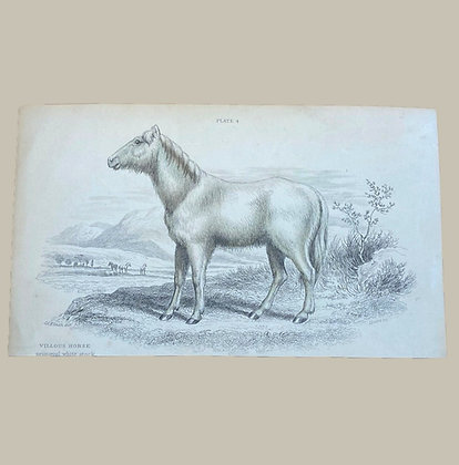 Villious Horse, Primeval White Stock - Plate Print Circa 1870