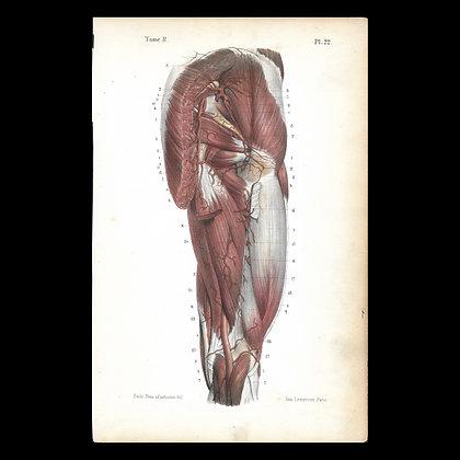 Plate 22 - Arteries of the Thigh & Buttock. Original 1847 Print.