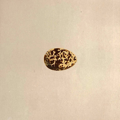 White Winged Black Tern, Egg Print Circa 1890