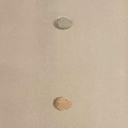 Grey Headed Wagtail and Yellow Wagtail, Egg Print Circa 1890