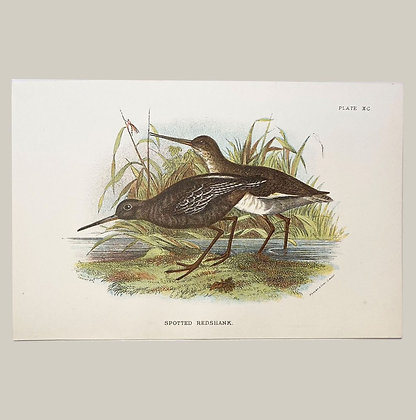 Spotted Redshank, Small Plate Print -1893
