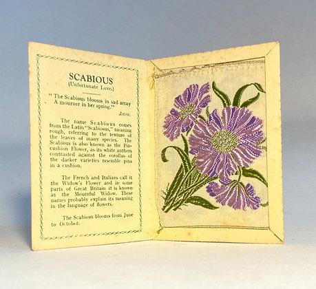 Scabious - Silk Embroidery 1933 Cigarette Card