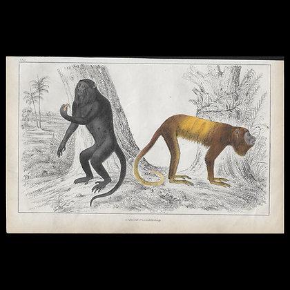 Monkeys - 1858 Hand Watercoloured Print