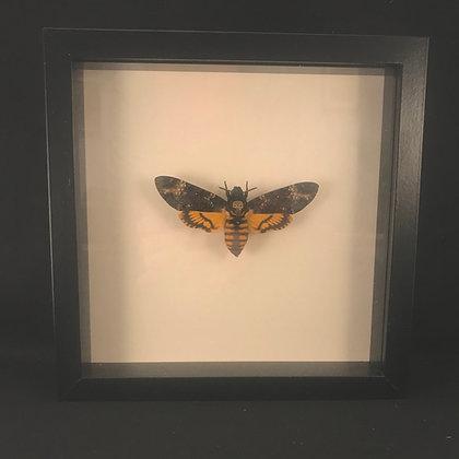 Framed Deathshead Hawk Moth (Acherontia atropos)